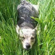 Lekker spelen in het gras