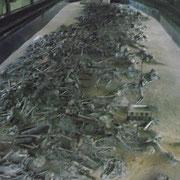 長く続く「遺骨」の列(発掘したのはその一部)
