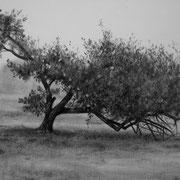 Thise (Doubs, 25) - Gesso, graphite et pierre noire sur toile - 33 x 41 cm - 2014