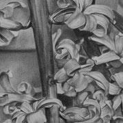 Jacynthe - Gesso, graphite et pierre noire sur toile - 41 x 33 cm - 2014