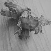 Gesso, graphite et pierre noire sur toile - 41 x 33 cm - 2014