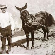Das unentbehrliche Maultier - der Traktor über Jahrhunderte.