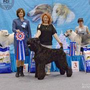 САС!В г. Новосибирск 2013 год Лучший Представитель породы САС!В