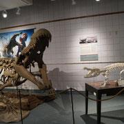 Aligator gestern und heute