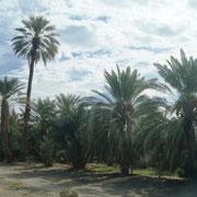 und wir sehen viel Landwirtschaft und Palmen