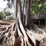 ein Baum? oder mehr?