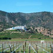 wir ziehen durch Wein-Regionen