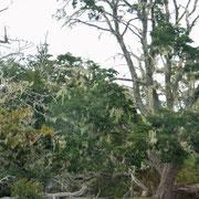 erst einmal sehen wir ein grosses Waldsterben