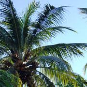 wer hat die Kokosnuß geklaut?