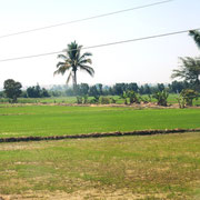 die Landschaft ändert sich - Reisfelder