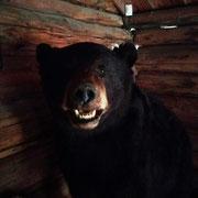 so nahe wollen wir dem echten Bär nicht kommen!