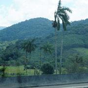 linker Hand erahnen wir den Regenwald - so sattes GRÜN
