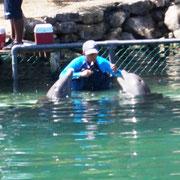 mit diesen Delfinen kann man schwimmen