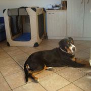 Bonnie findet die Wohnung sehr entspannend