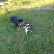 Bonnie und Maja
