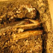 Rohrbruch an Heizungsleitung im Fußboden