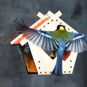 Оконная кормушка - птичий восторг