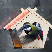 Оконная кормушка - центр притяжения птиц