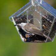 Кормушки для птиц собственной разработки и производства.