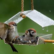 Кормушка для фотографа и птиц.