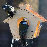 Птицы и оконная кормушка