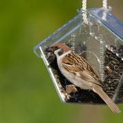 Кормушка для птиц на балкон.