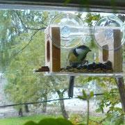 Синичка на оконной кормушке для птиц
