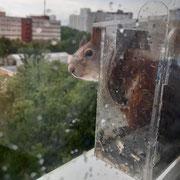 Белка на 8 этаже, Москва, фото - Михаил Косинов