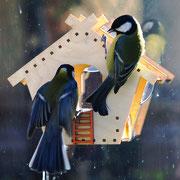 Птицы на оконной кормушке