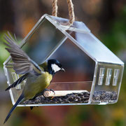 Кормушка прозрачная с птицей.