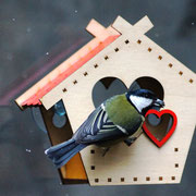 Самая сердечная оконная кормушка для птиц