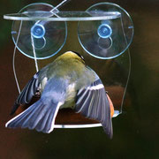 Красивая прозрачная кормушка на стекло - Синтез