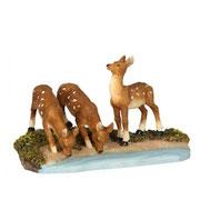 603044-Deer drinking