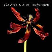Galerie Klaus Teufelhart