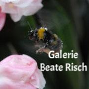 Galerie Beate Risch