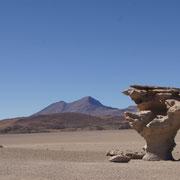 Den Steinbaum - Arból de Piedra - im Geländewagen besichtigen