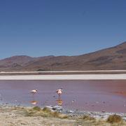 Die Laguna Colorada ist nur eine von mehr als zehn Seen im Hochland von Uyuni