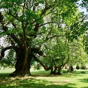 England Gartenreise Goodnestone Park Kent