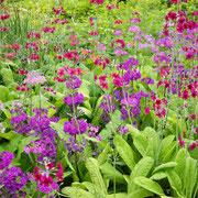 Gartenreise England . Wisley Garden RHS