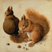 Eichhörnchen nach Albrecht Dürer