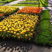 Tulpenbeete Keukenhof Sehenswürdigkeit  Blumenfestival Keukenhof Holland Frühlingsblüten