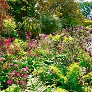 Gartenreise England : Wisley Garden RHS