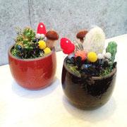 森のきのこ サボテン鉢 販売