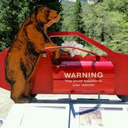 Die Bären knacken auch Autos