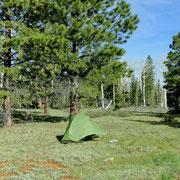 """Camp außerhalb im """" National Forest """""""