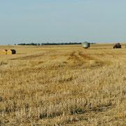 Die Getreideernte ist im kleinen Silo...
