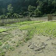 Gepflegte Gemuesegaerten am Flussufer