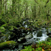 Grüner Märchenwald
