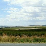 Weingaerten und Getreidefelder beherrschen die Landschaft