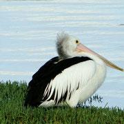 Ein gemuetlicher Vogel